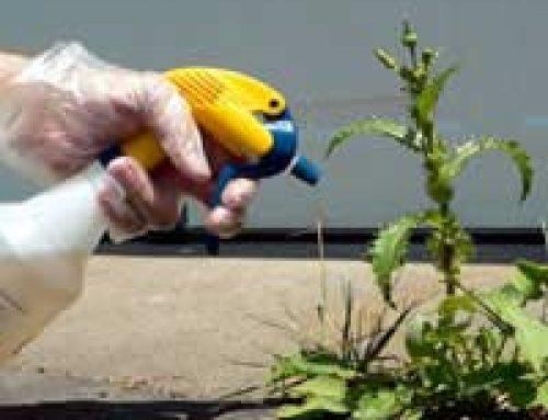 Weed Killer Safety