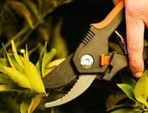 How to Sharpen Your Garden Tools