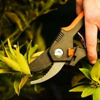 Secateurs and Shears