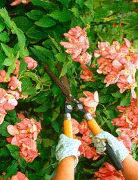 Hedge Cutters, Pruners and Trimmers