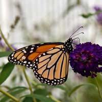 Protect Garden Wildlife