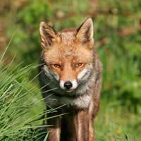 Wildlife Threats to the Garden