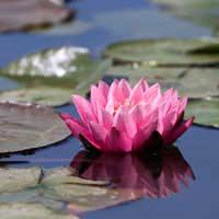 Keep Your Pond Safe