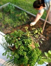 Gardening Crop Rotation: Safety Benefits