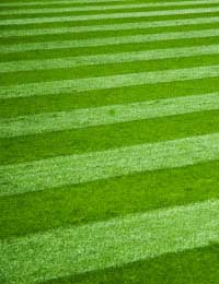 Why to Keep a Lawn & Some Maintenance Tips