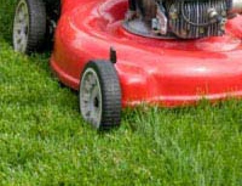 Lawn Care: Specialist Tools for the Elderly or Wheelchair Bound