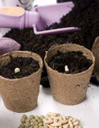 Garden Planting for People With Failing Sight