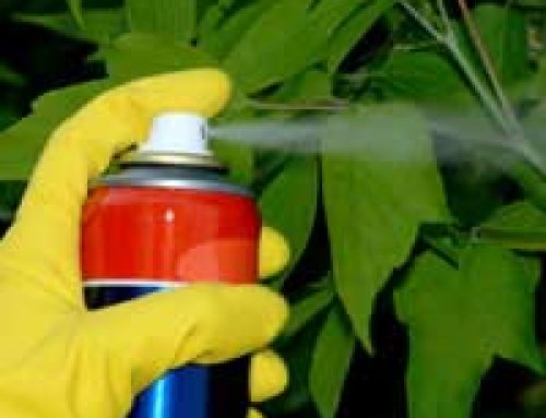 What to do in the Event of Poisoning