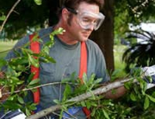 Felling Trees Safely