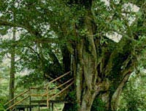 Building a Kid's Tree House Safely
